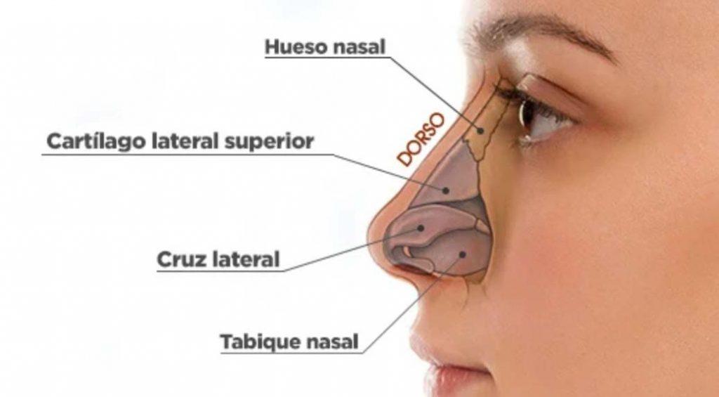 efectos del consumo de coca en la nariz y el tabique